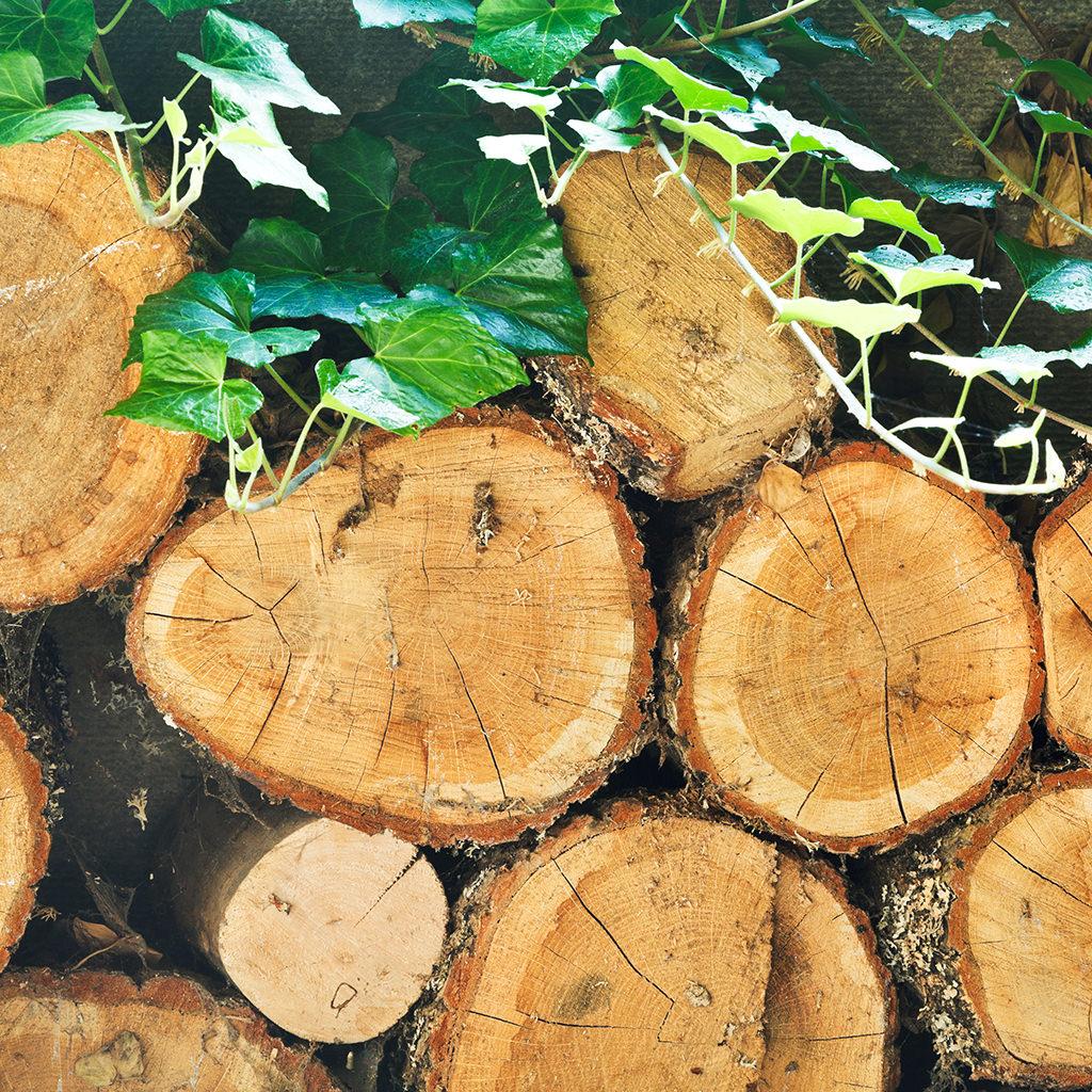 Stapel altes Holz mit Schmerle überwachsen